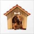 Nasce Baudget. Il preventivatore online per l'acquisto dell'  assicurazione cane