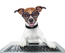 CIAM Animali partner digitale di European Brokers per la distribuzione di SafeDog