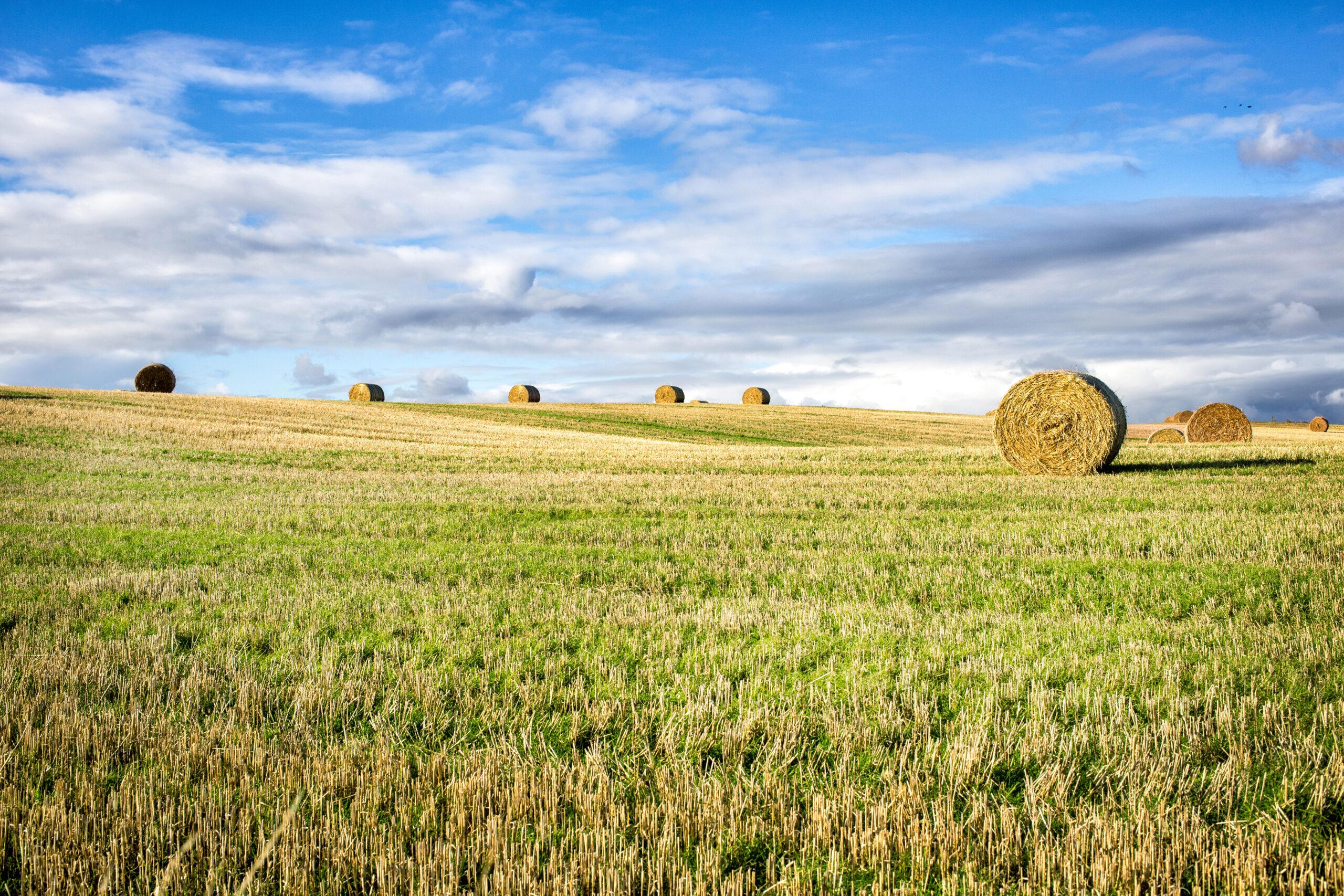 piano agricoltura italia assicurazioni